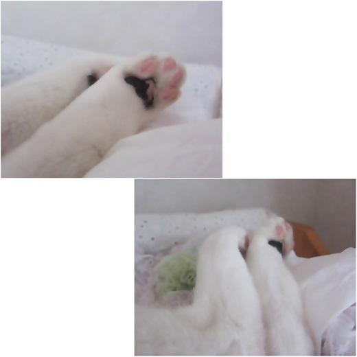 cats_20171024212255afb.jpg