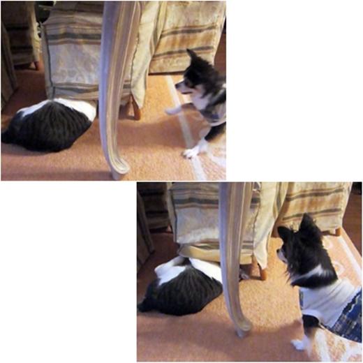 cats_20171108175319af2.jpg