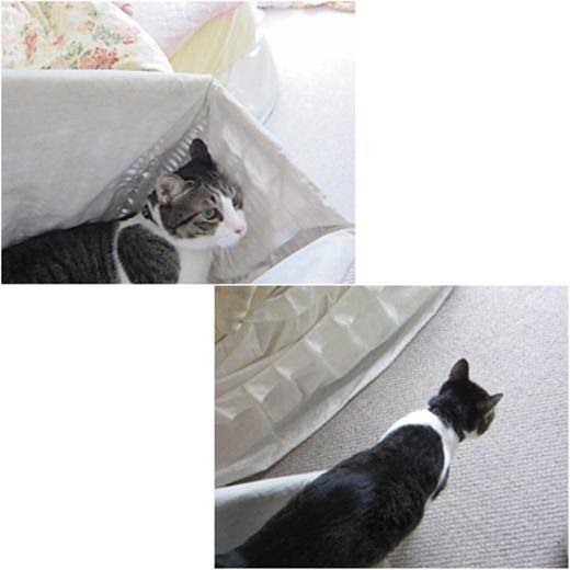 cats_20171113193650dc1.jpg