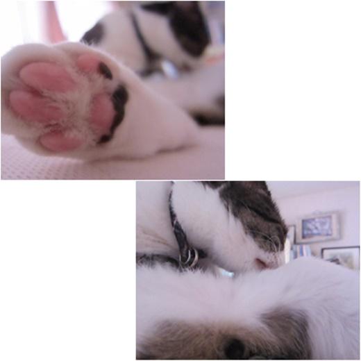 cats_20171114210904668.jpg