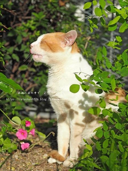 モクセイの咲く公園6