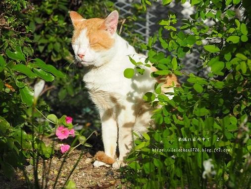 モクセイの咲く公園3