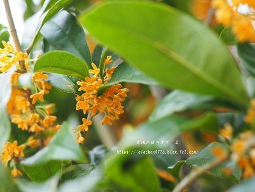 モクセイの咲く公園2