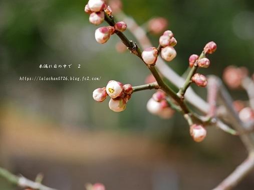 2月に咲く つぼみ