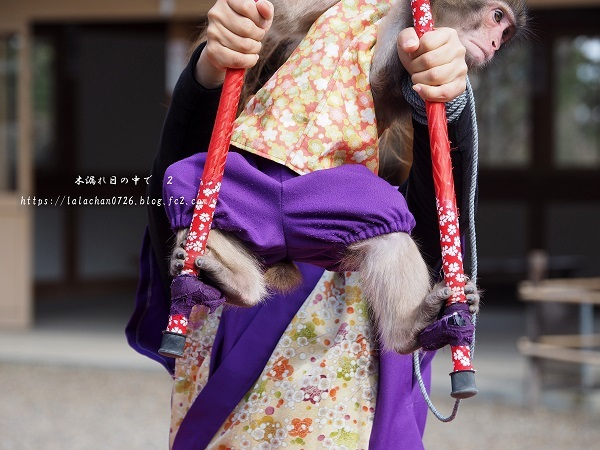 2月に 猿まわし4