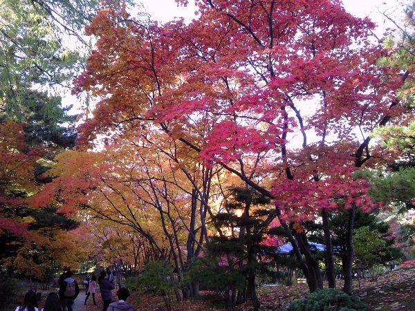 中島公園紅葉04