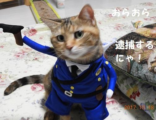 DSCN3378_20171021110951aef.jpg