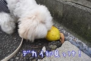 狂犬病10