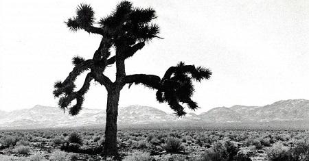 arvore-de-josue-fotografada-no-deserto-de-mojave-na-california-1488931350270_v2_956x50ロスト・ソング