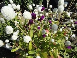 10月の花1