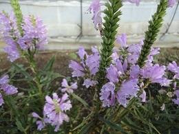 10月の花4