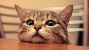 可愛い猫187