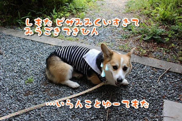 IMG_4215_2017051221281366e.jpg