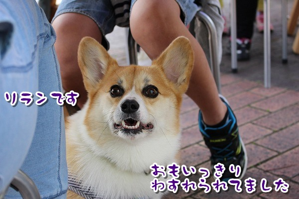 IMG_4268.jpg