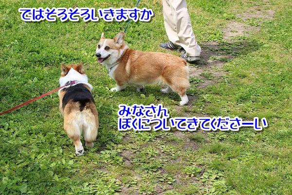 IMG_4290.jpg
