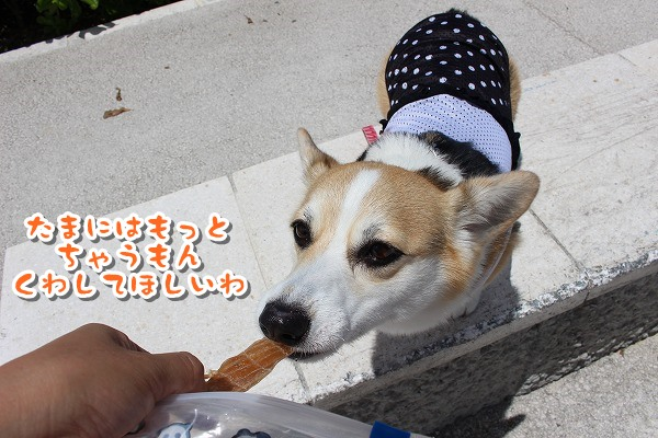 IMG_7340.jpg