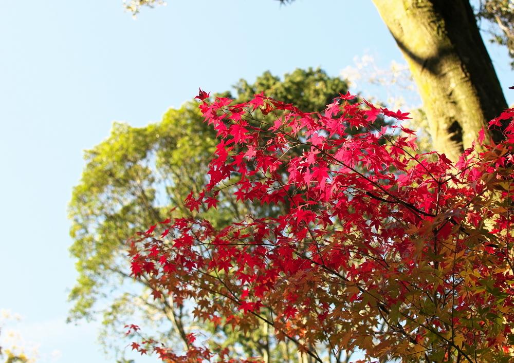 紅葉 (3)