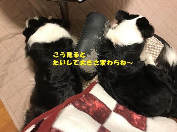IMG_5973_201710141435460ce.jpg