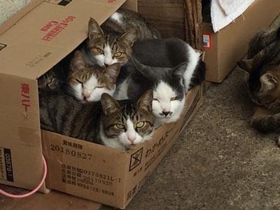 隣の猫たち