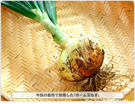 ペトさい(ホーム玉ねぎR)25