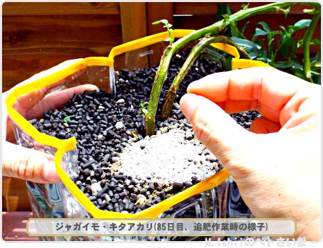 ジャガイモの試験栽培54