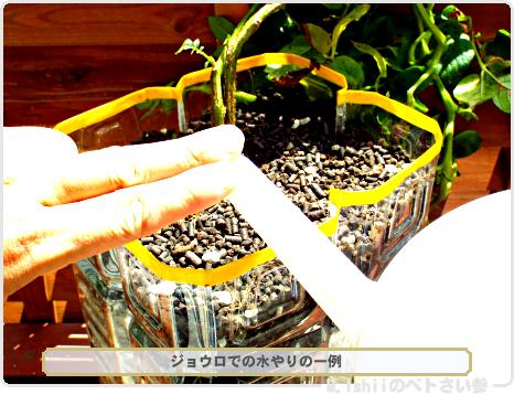 ジャガイモの試験栽培57