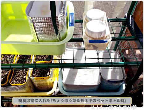 ちょうほう菜&長ネギの種蒔き作業03