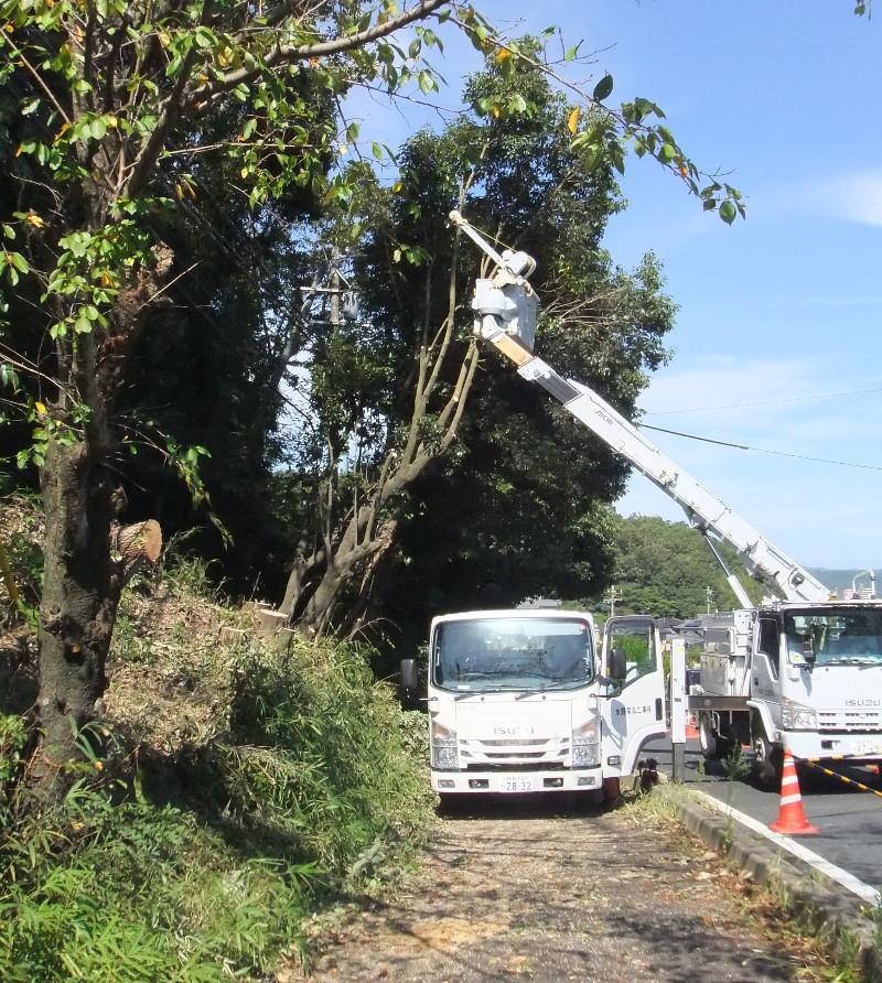県道沿い伐採作業が行われた2
