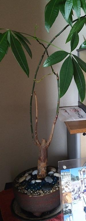 170915植木 (1-1)
