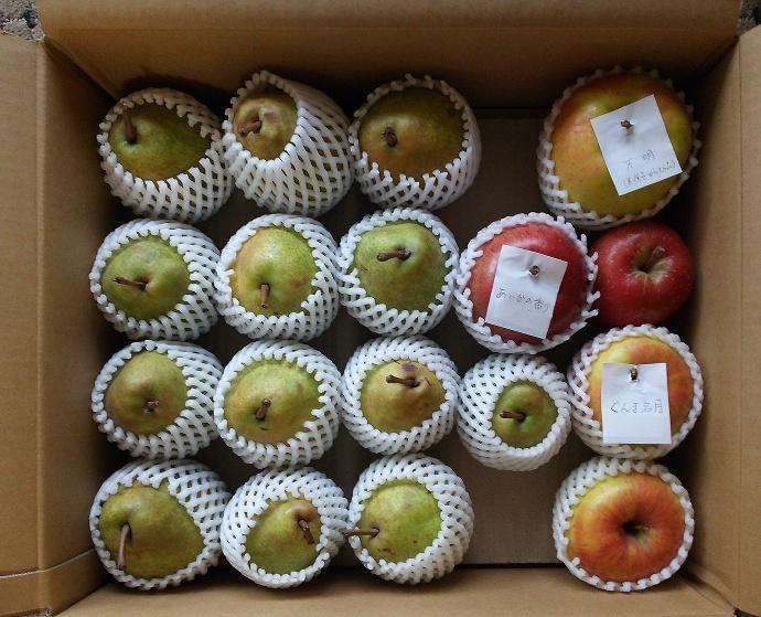 171111リンゴ