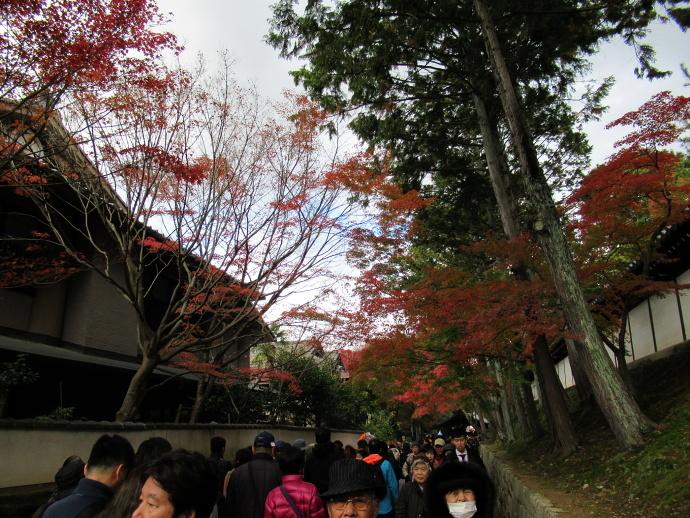 171119東福寺 (0)