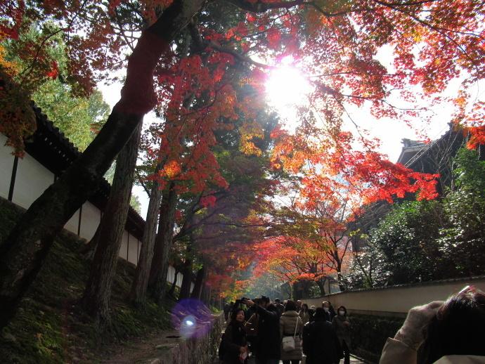 171119東福寺 (1)