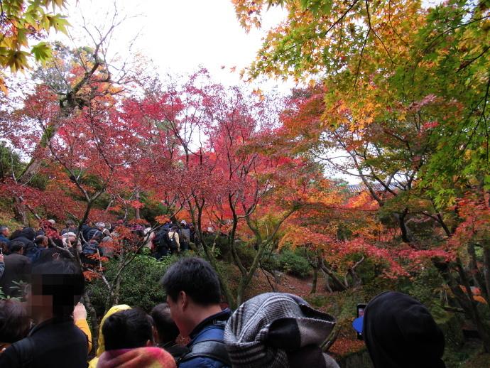 171119東福寺 (6)