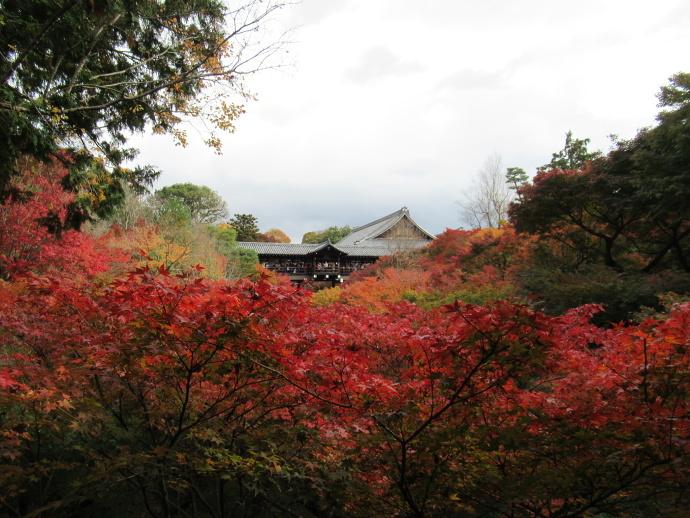 171119東福寺2 (1)