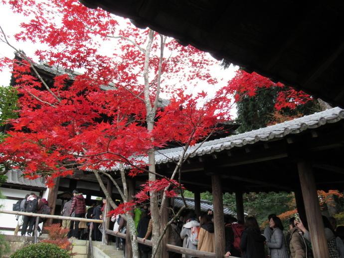 171119東福寺2 (5)