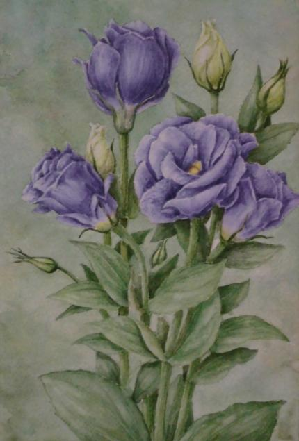 トルコキキョウ 1810