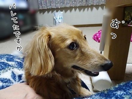 kinako7519.jpg