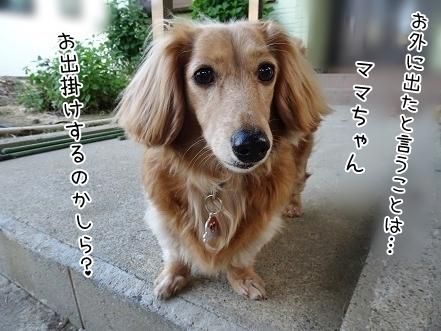 kinako7539.jpg