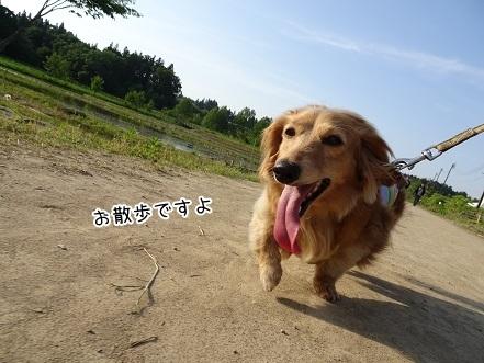 kinako7544.jpg