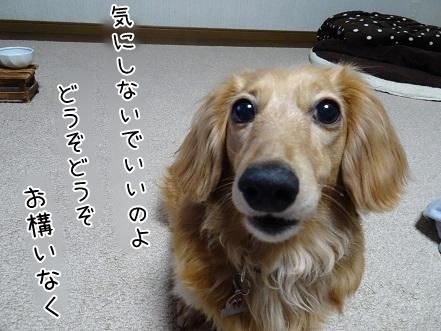 kinako7553.jpg