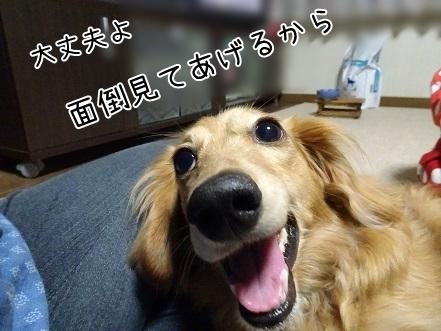 kinako7558.jpg