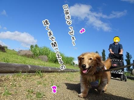 kinako7593.jpg
