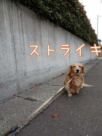 kinako7598.jpg