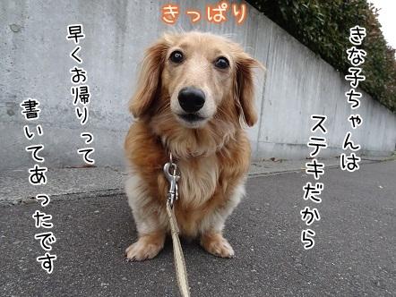 kinako7602.jpg