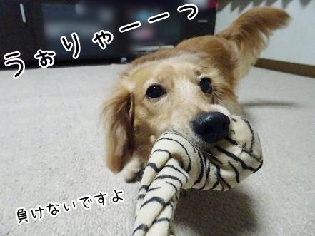 kinako7691.jpg