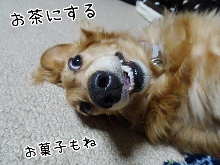 kinako7699.jpg