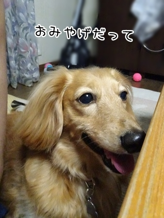 kinako7701.jpg