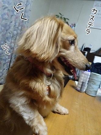 kinako7703.jpg