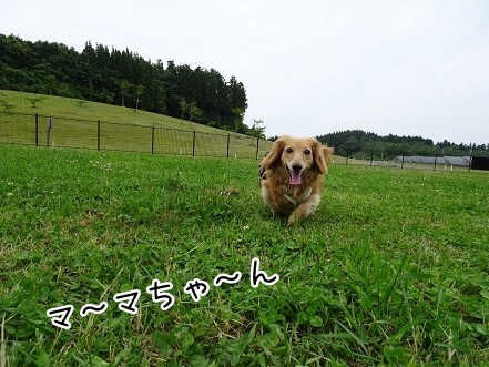 kinako7712.jpg