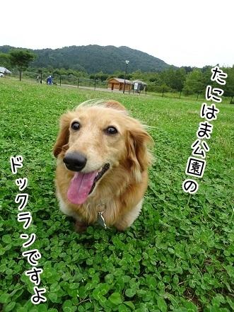 kinako7713.jpg
